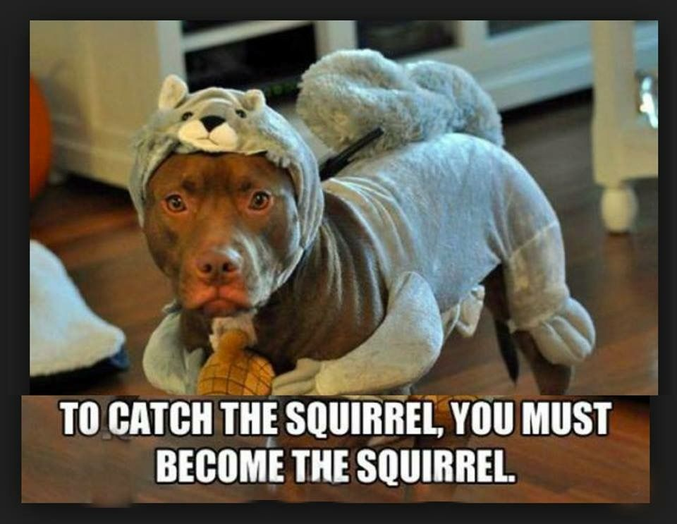 Pin By Cheri Michele Brown On Giggles Funny Dog Memes Funny Dogs Dog Memes