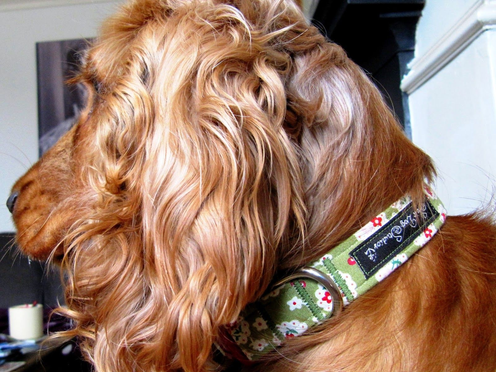 Product Review: Salt Dog Studios fabric collar - A Spaniel's Tail