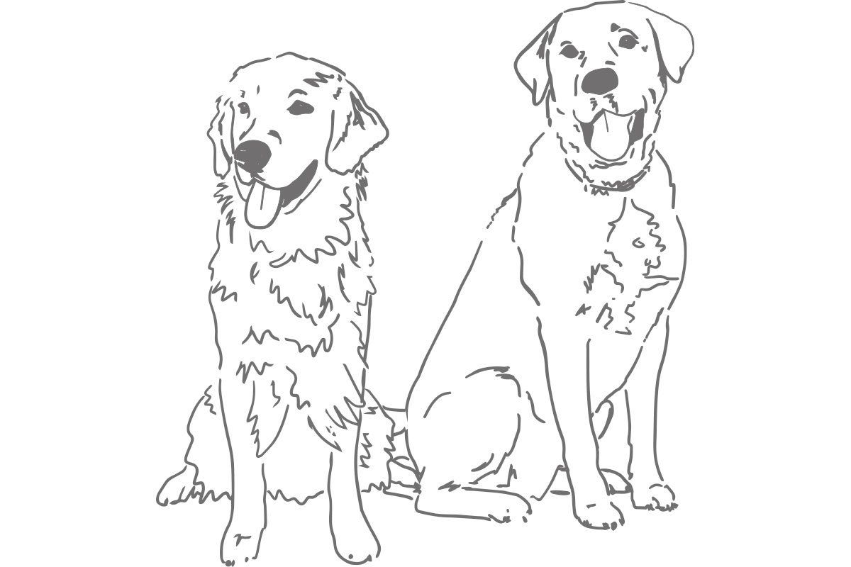 Sketch Of Golden Retriever And Lab Monogram Art Animal Silhouette Dog Drawing [ 800 x 1200 Pixel ]