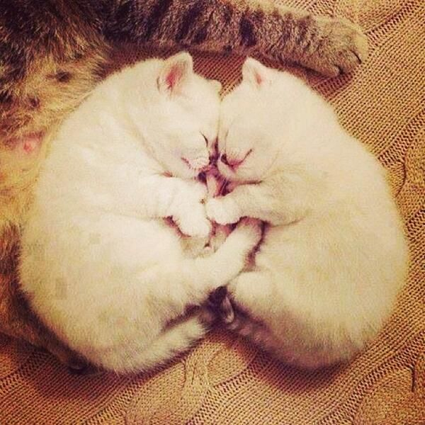 A Couple Of Cuties Cute Cats Kittens Cutest Baby Animals