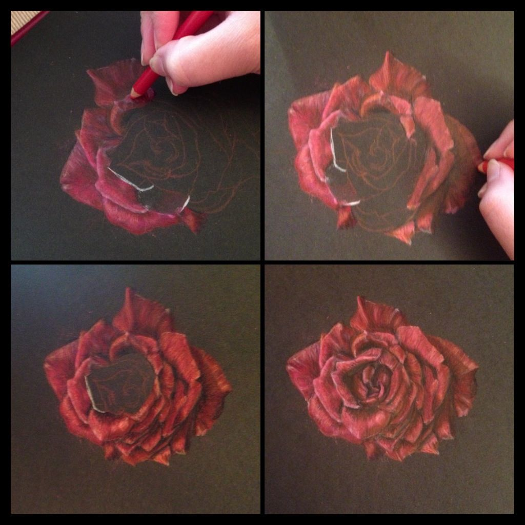 Rose Done With Prismacolor On Black Paper Black Paper Drawing Color Pencil Art Flower Drawing