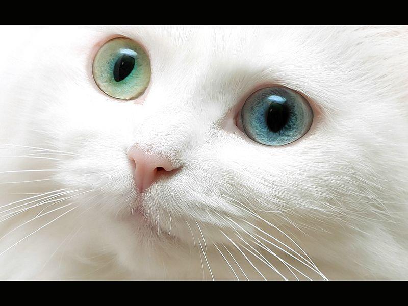 масисе картинки аватарки белый кот принялись хвалить