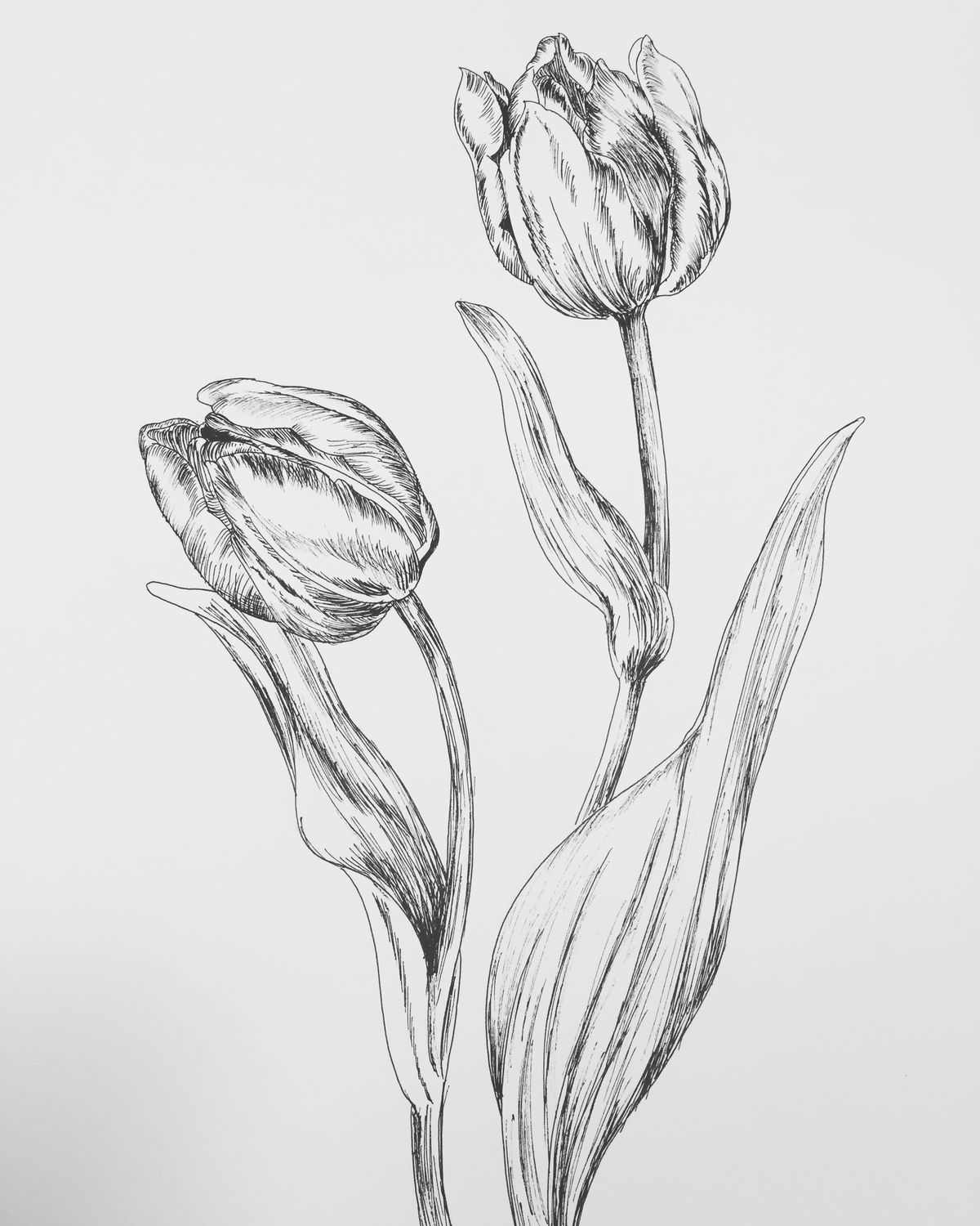 Pin By Maxie Jingles On December Ink Flowers Doodles 2020 Realistic Flower Drawing Flower Line Drawings Tulip Drawing