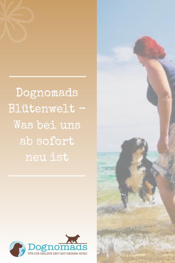 Freiheit Beginnt Dort Wo Die Angst Endet Hundegesundheit Gesunde Hunde Hunde