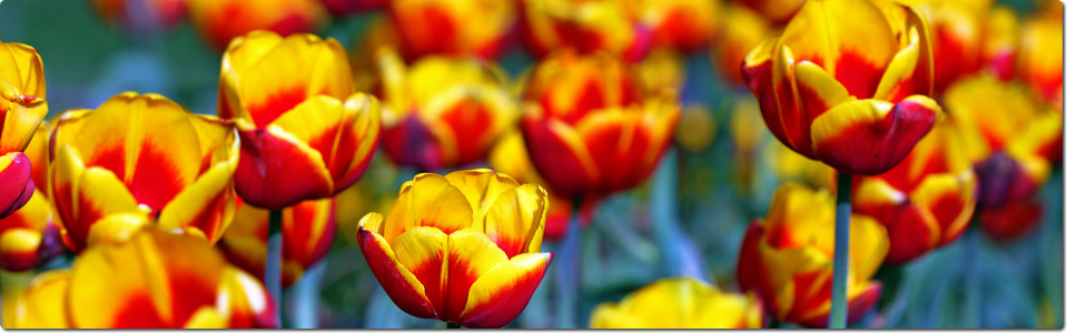 #Venlo, Netherlands.  Floriade World Horticultural Expo.  Held every 10 years.  Taking place from April 5 - Oct. 7, 2012.