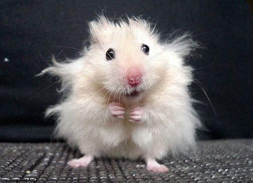 Photo of 22 Tiere, die einen fieseren Bad Hair Day haben als Du