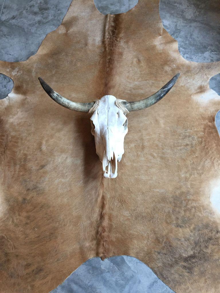 Longhorn Skull, boho, bohemian style, skull decor, cowskull