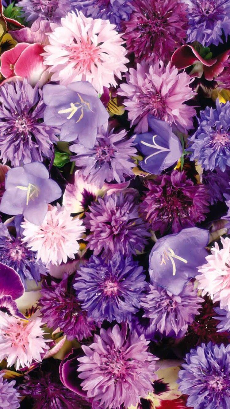 Purple Flowers Hd Iphone Wallpaper Wallpapers Pinterest