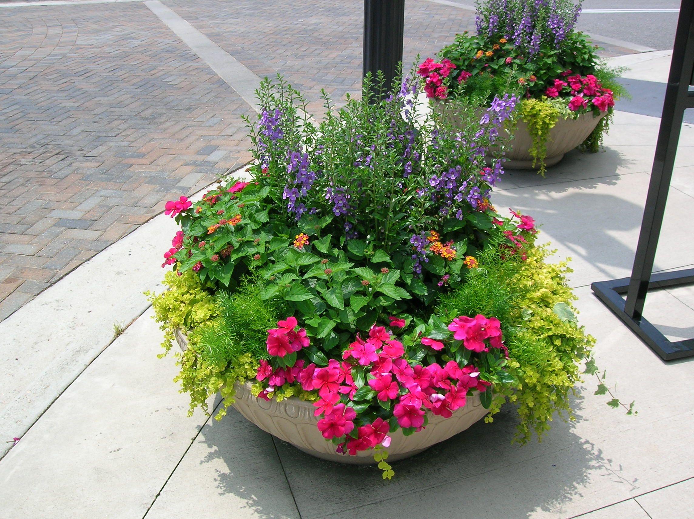 Low bowl summer annual planter Summer planter, Plants