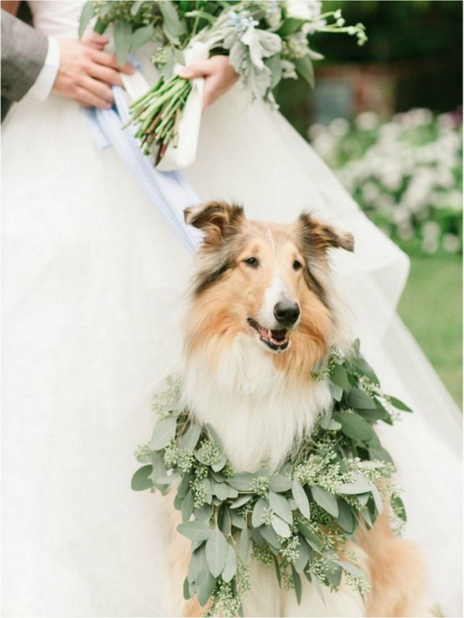 14 Awesome Ways To Include Your Dog On Your Big Day | Weddings