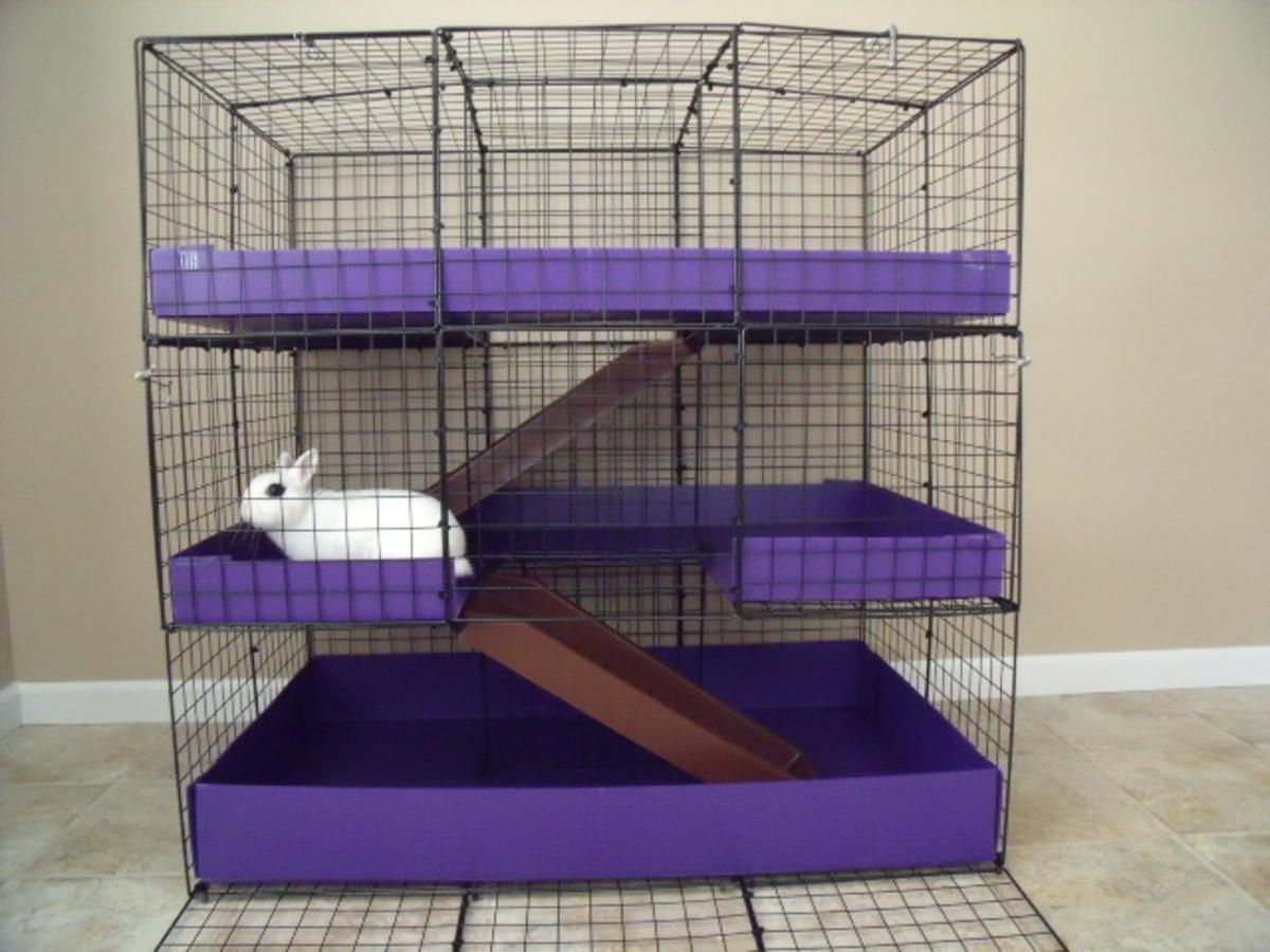 Coroplast Diy Rabbit Cage Ideas Bunny Cages Rabbit