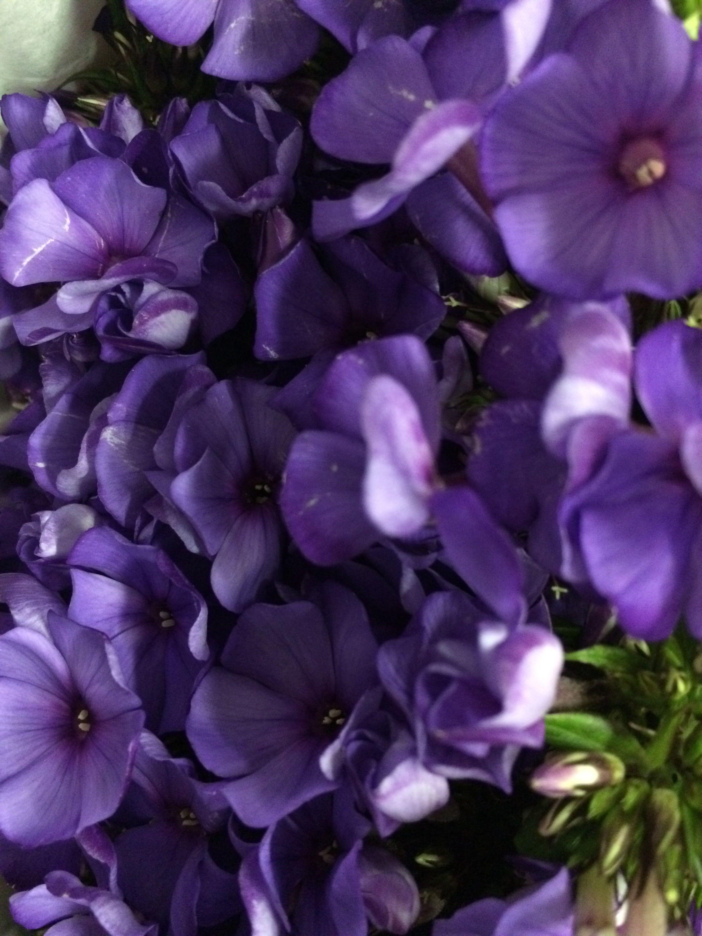 e1c623ff6e3b Dark Purple