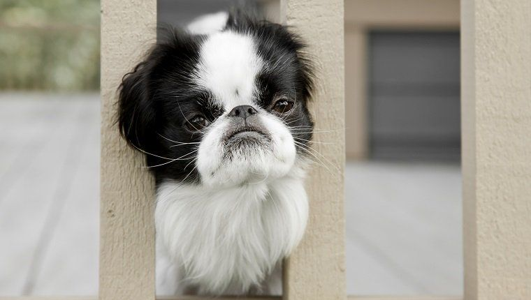 Top 32 Small Dogs Who Make Good Apartment Dogtime