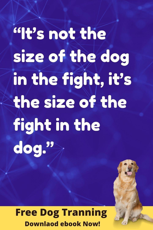 Pin On Dog Training Tips Problem Solving Qa