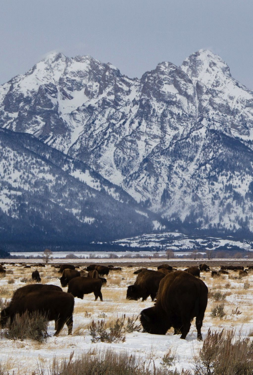 Jackson Hole, WY I've been there it's beautiful I can't wait to go back I want to go camping on horseback and look at some properties there to build a log cabin !!