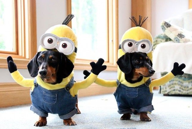 62 of the Best Halloween Dog Costumes & 62 of the Best Halloween Dog Costumes | Dog Dog halloween and Doggies