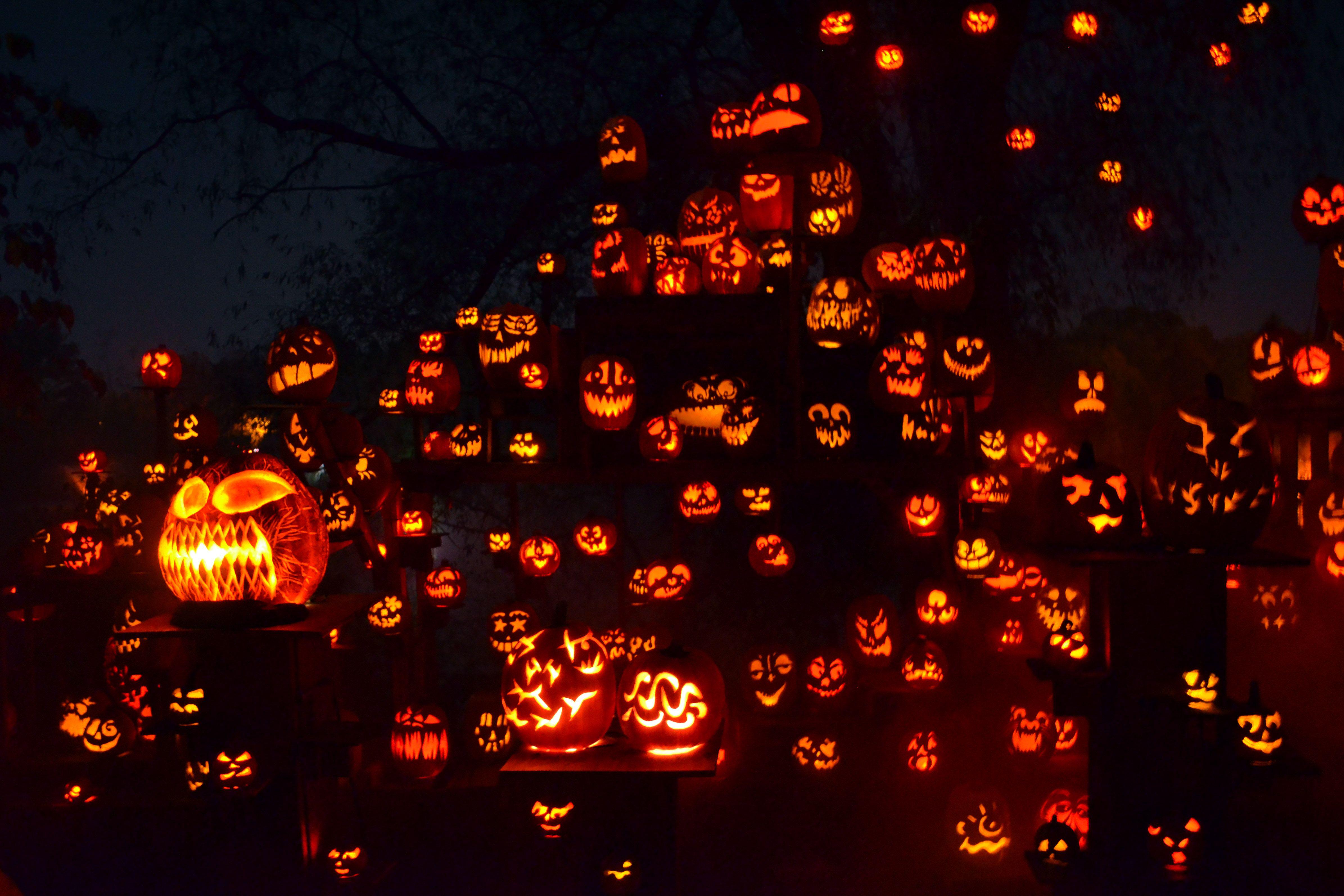 roger williams pumpkin spectacular coupon   roger williams zoo