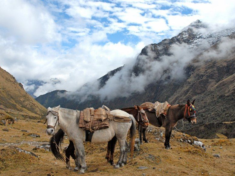 Peru; Camino Salkantay - Though they're essentially the local cargo vans, these horses will give you a ride if your own legs need a rest.