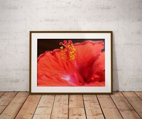 Hibiscus Photograph, Hibiscus Wall Art, Red Flower Photo, Tropical ...