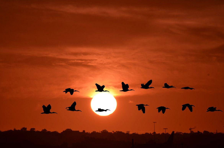 Flight Landed But Birds Departed
