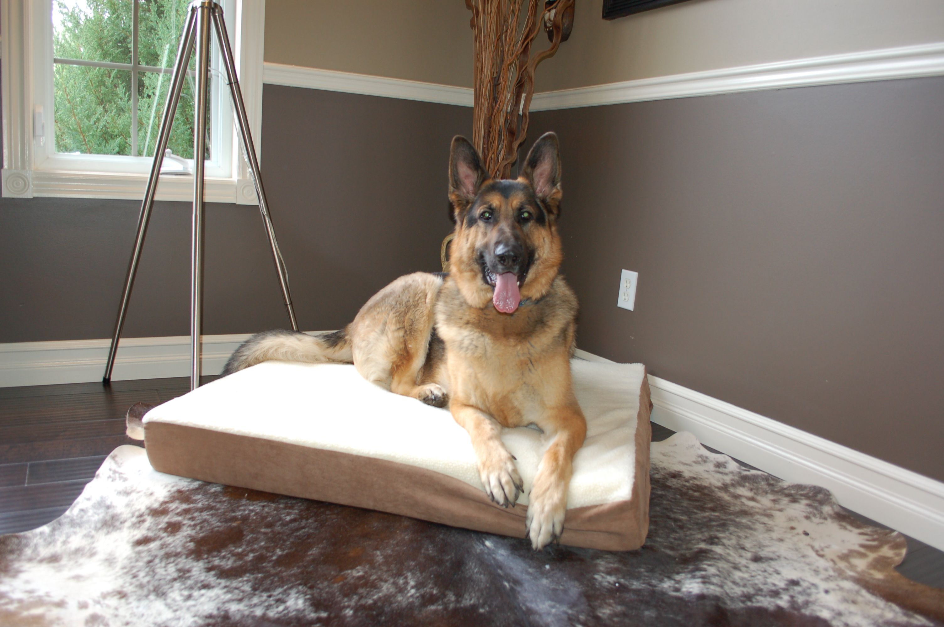 Pin by Glenn Normano on Dog Beds Cool dog beds, Extra