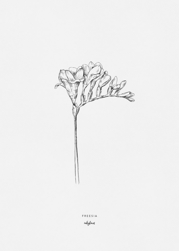 404 404 Realistic Flower Drawing Flower Drawing Botanical Drawings