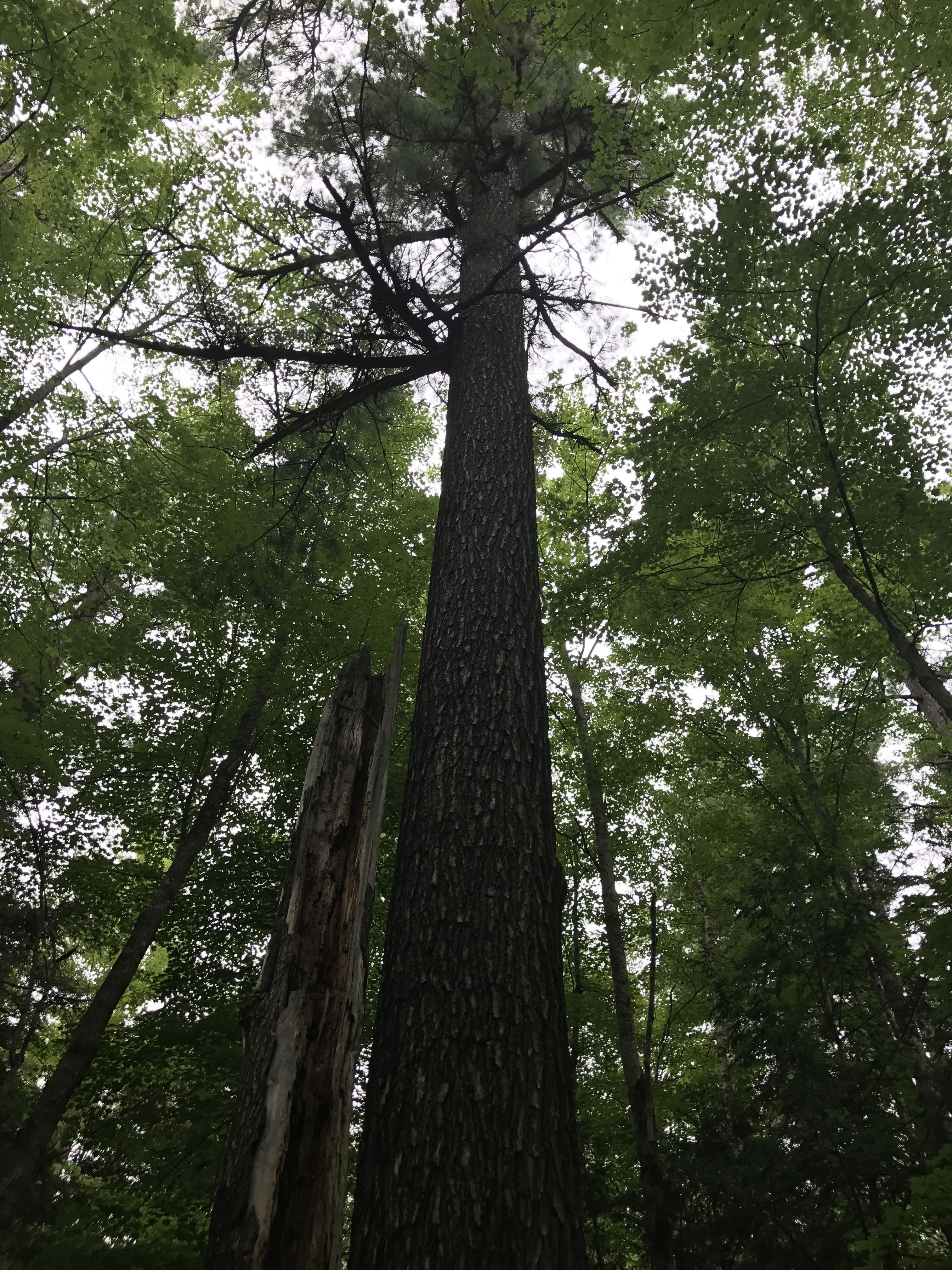 Hartwick Pines State Park (With images) Pure michigan
