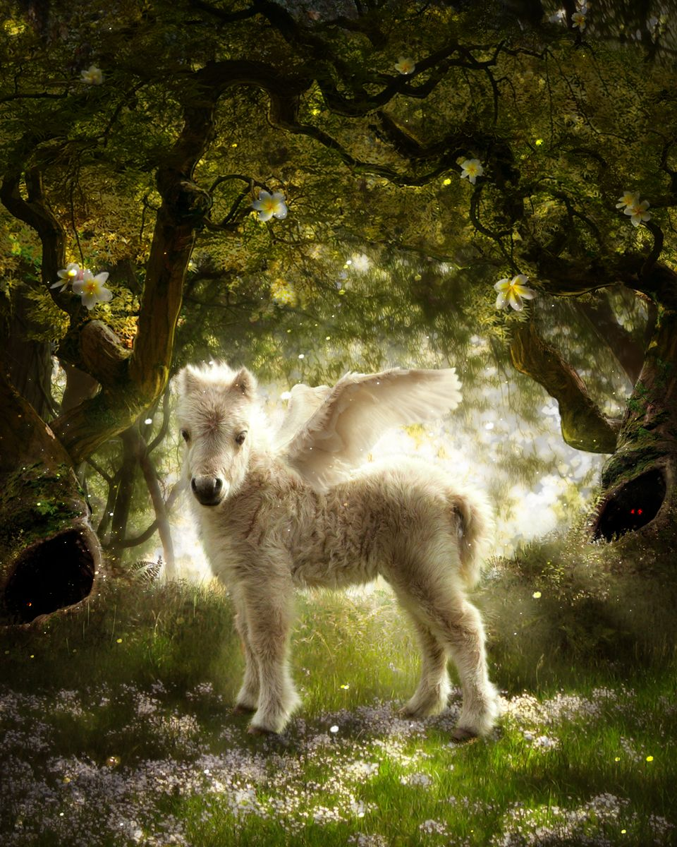 Photoshop Design by NilliNeuf for Unicorns and Pegasi 9 - Design #8795803
