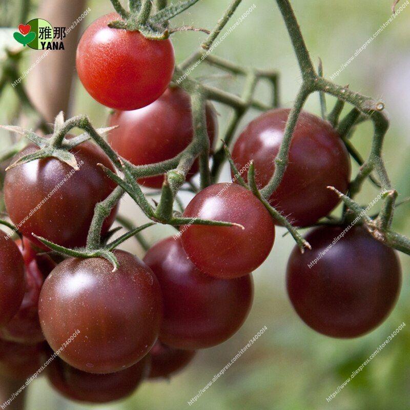 100 Pcs Bag Black Cherry Tomatoes Balcony Organic Fruits 400 x 300