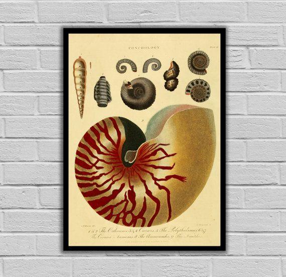 Vintage Seashell Decor - Print or Canvas - Conchology Art Prints ...