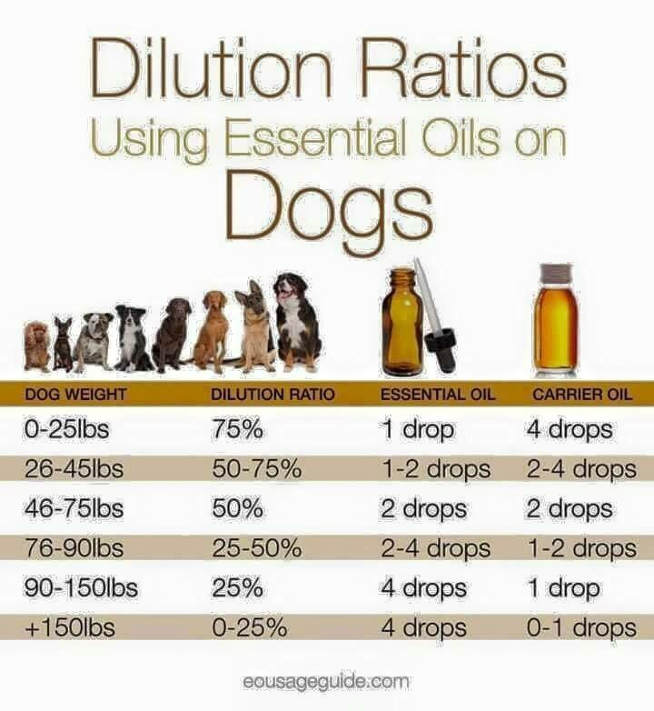 Essential oil dilution ratio for dogs please also keep in mind your dog   sensitivity and the characteristics of you are using rh pinterest