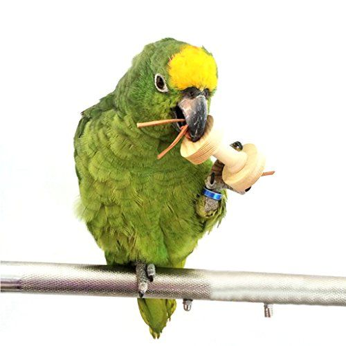 Scastoe Pet Parrot Bird Dumbbells Chew Toys Wood For Parakeet Cockatiel Fun Cage Toy New See This Great Product Note It Is Affiliate Link To Amazon Goruntuler Ile