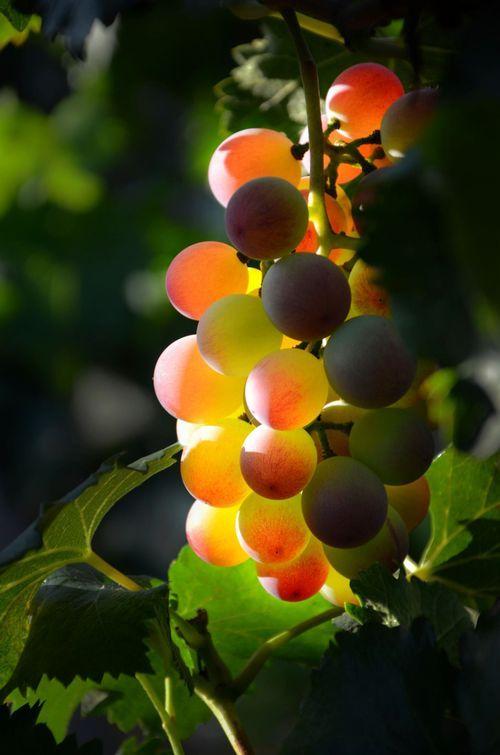 Beauntiful Harvest