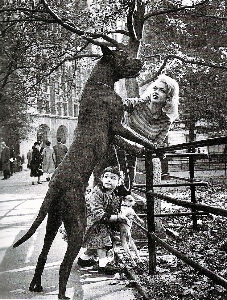 Jayne Mansfield Daughter Mariska Hargitay New York 1967 Life Magazine Great Dane Dane Vintage Dog
