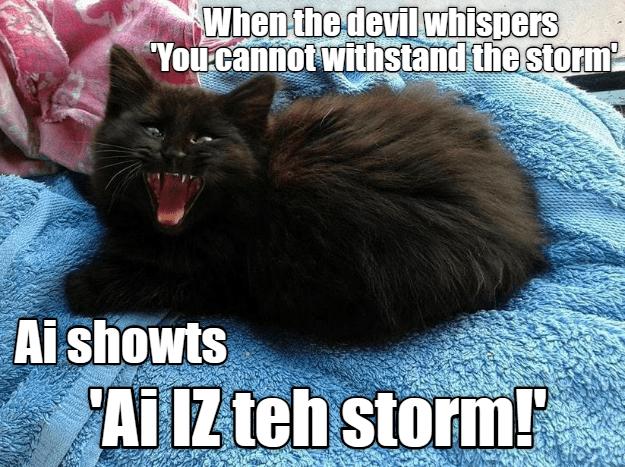 70 Most Hilarious White Cat Meme Funny White Cat Images In 2021 Funny Cat Memes White Cat Meme Silly Cats