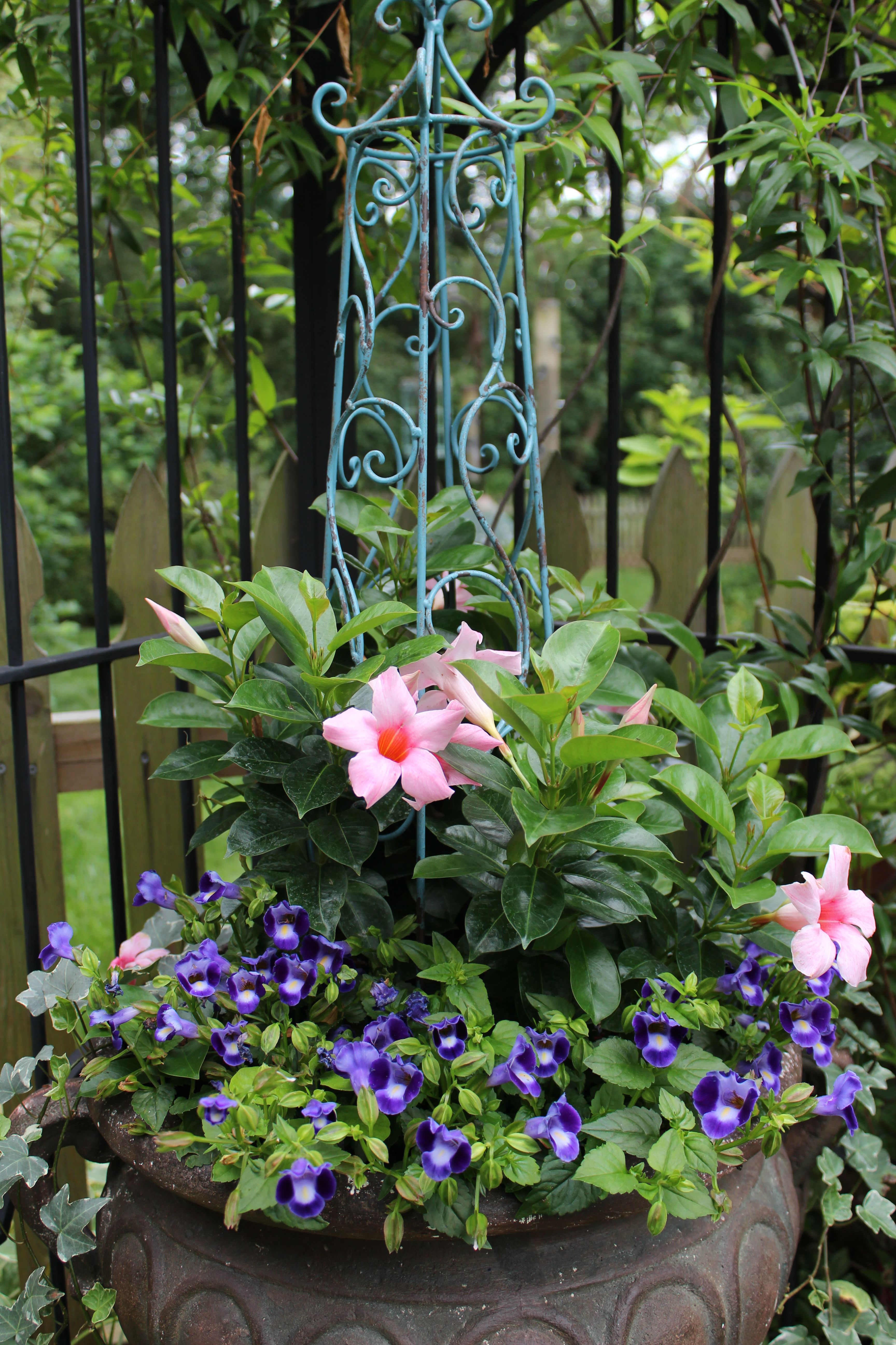 New plants for my garden urn 2012 container gardening for New garden plants