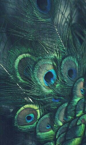 Pin by ️nox on (OC) Lux Peacock wallpaper, Peacock