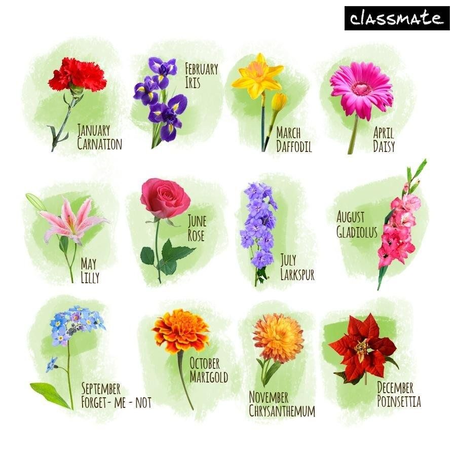 August Images August Pictures August Wallpaper August Quotes August Sayings Birth Flower Tattoos Birth Month Flowers August Birth Flower