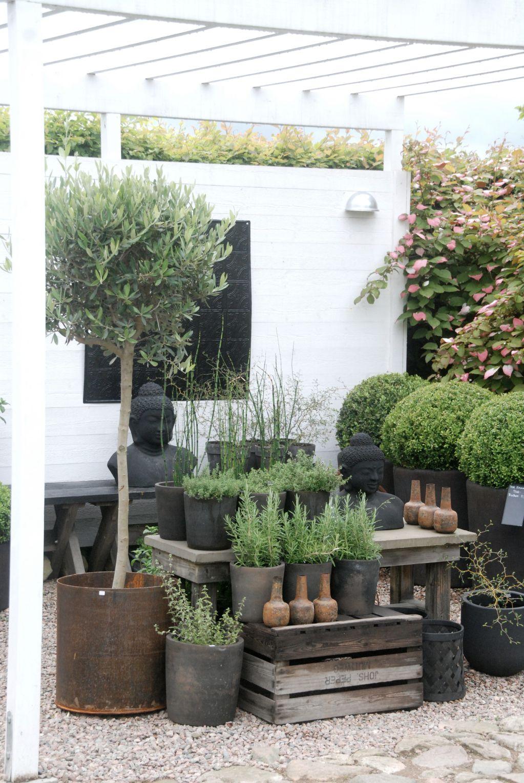 Pin De Leticia Gesto En Inspiracion Green Jardineria En Macetas Macetas Exterior Jardines