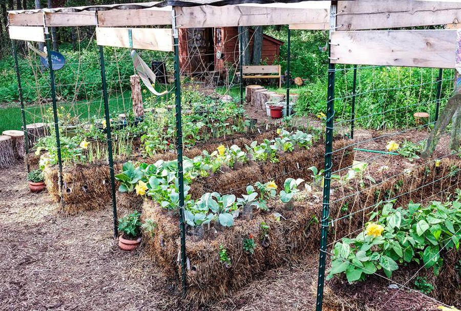 Straw Bale Gardening In 2020 With Images Straw Bale Gardening