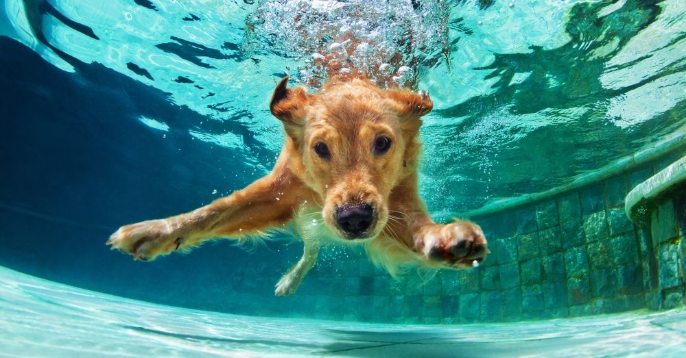 10 Tips For Teaching Your Dog To Swim Or At Least To Stay Afloat