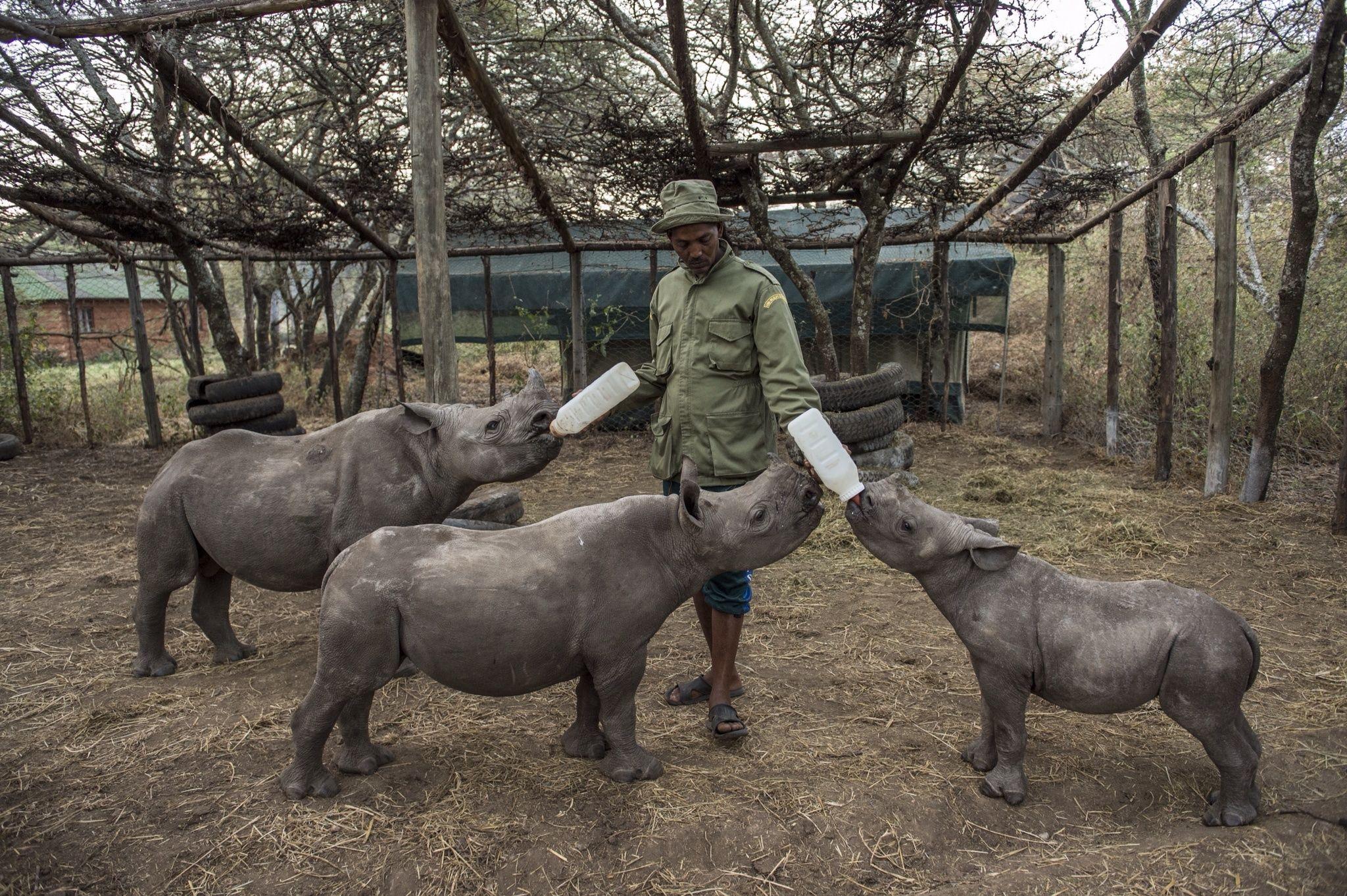 Communities Combat Poaching in Kenya (Storehouse)