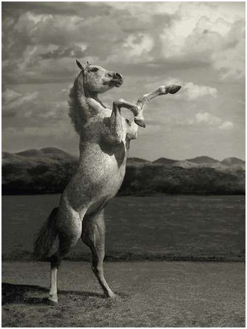 I have a horse that looks like this one.  But I'll never get her to pose like this!