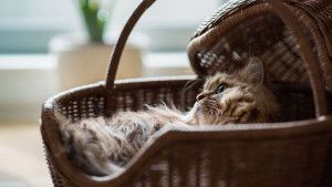 Cats Pictures & Wallpapers - Free Wallpapers Downloads