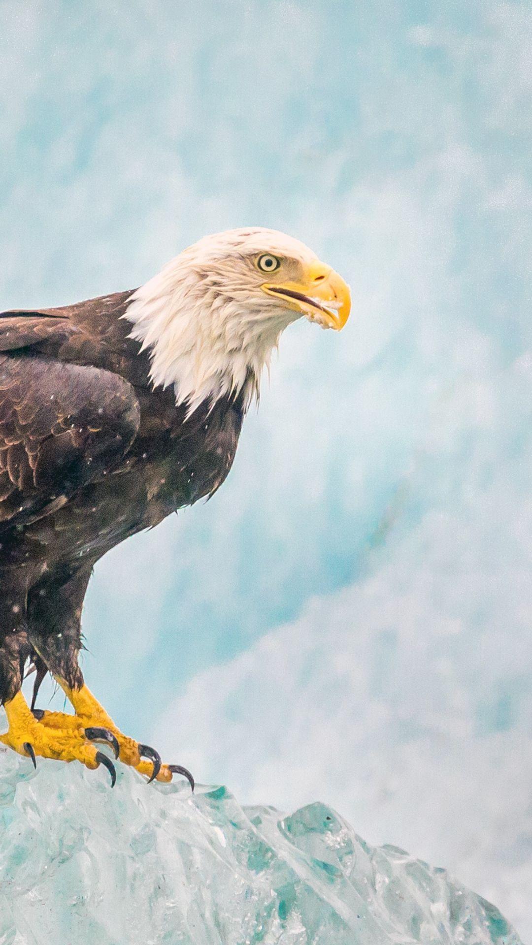 Eagle Bird Predator Ice Iphone 8 Wallpapers Eagle Wallpaper