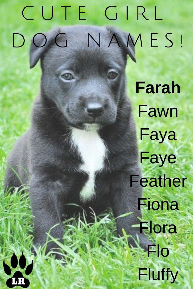 300+ Girl Dog Names AZ Dog names, Girl dog names, Girl