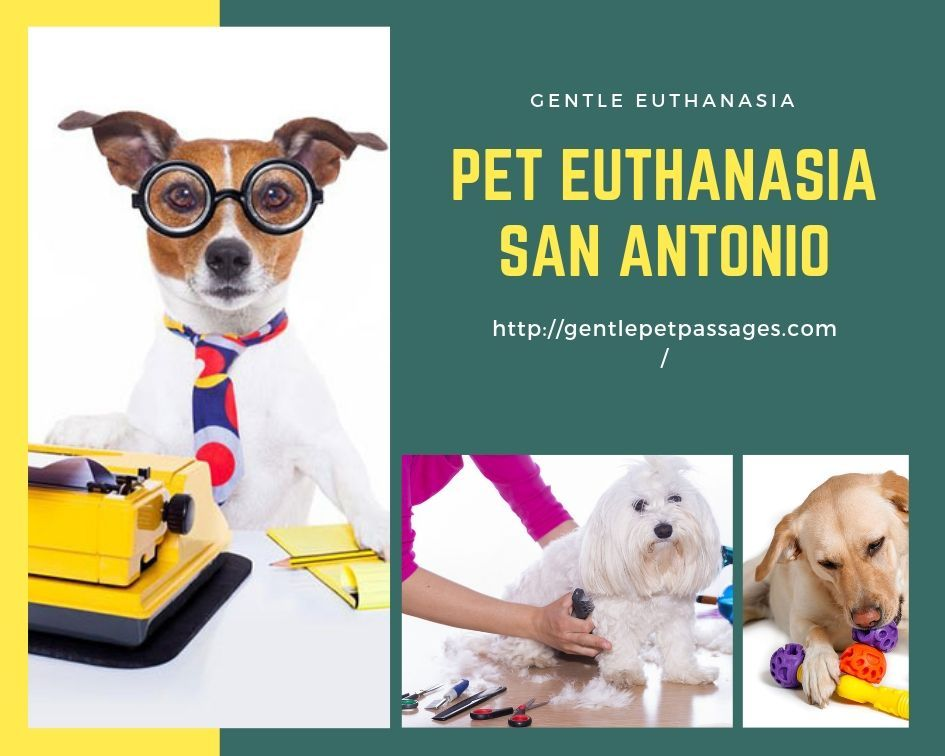 Dr Killian Will Drive To Your Home And Perform A Quality Of Life Assessment Key Facets Of Your Pet S Condition Will Be Assesse Pets Severe Arthritis Your Pet