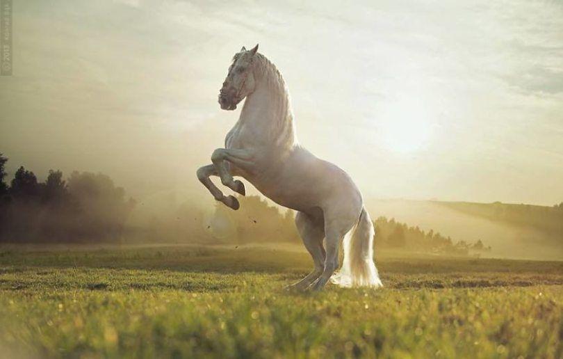 Fotos lindas capturadas de cavalos selvagens