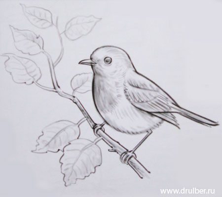 Kak Narisovat Ptichku Karandashom Poetapno Zhivotnye Narisovat Pticu Risunki Zhivotnyh Eskizy Zhivotnyh