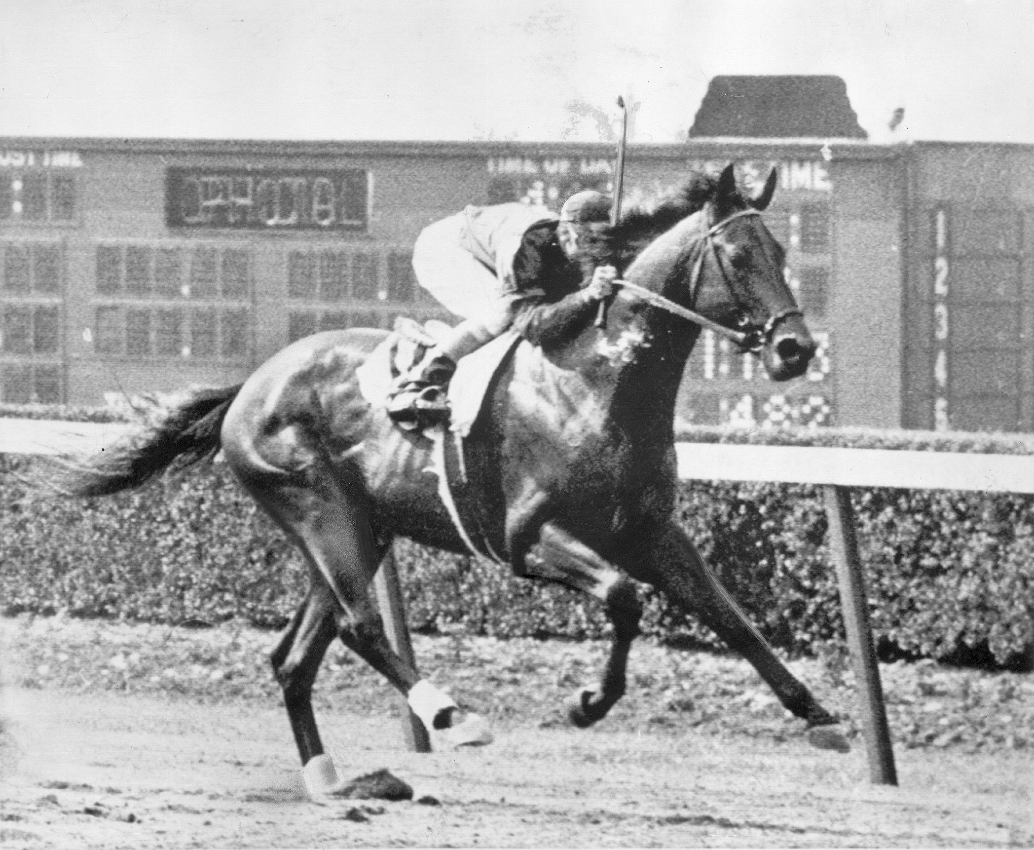Pin On Thoroughbred Horses 1940 1969